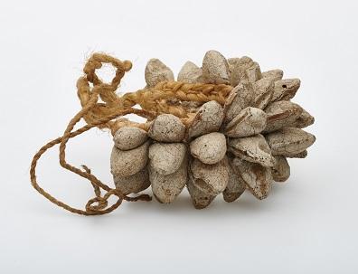 bushman-rattle